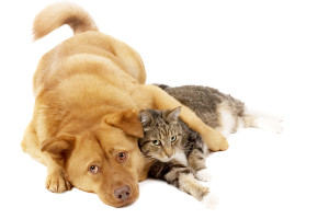 bigstock-dog-and-cat-relaxing-1637246