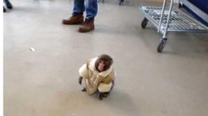 darwin_the_ikea_monkey